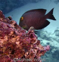 taken off the coast of Oahu by Michael Wicks