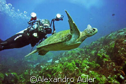 Green turtle at Cordilheiras Dive Point. Fernando de Noro... by Alexandro Auler