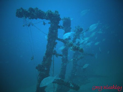 BRASS WRECK, Pensacola, Fl. Diving with MBT Divers by Greg Bleakley