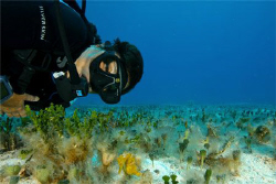 Deb finds a small seahorse in the flats. Cozumel, MX. Can... by Paul Holota