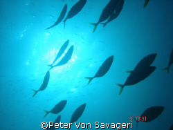 swimming free by Peter Von Savageri