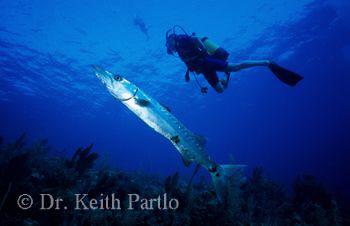 Saba by Keith Partlo