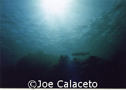 Cayman Seascape by Joe Calaceto