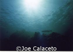Cayman Seascape by Joe Calaceto