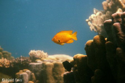 """Aquarium""  This may look like an aquarium, but it was ... by Kjeld Friis"