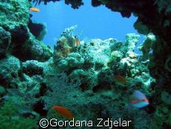 lionfish in a natural frame by Gordana Zdjelar