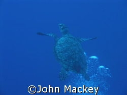 Tortuga in Cozumel by John Mackey