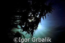 Sunshine in kelp (Lofoten Islands) by Igor Grbalik