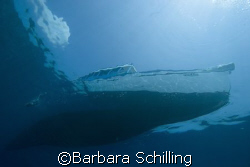 coming back from a dive. by Barbara Schilling