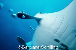 Close encounter by Barbara Schilling