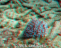 3D Marine Life by Nick Calaceto