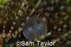 Inside a slate pencil Urchin. That's all I'm sayin. by Sam Taylor