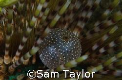 Inside a slate pencil Urchin. That's all I'm sayin. by Sam Taylor