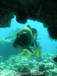 Sweet lips: photo taken @  kuredu Express dive site by Darren Keeble