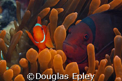 this one is in honor of fathers day...the old man and jun... by Douglas Epley