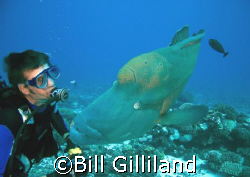 Who's looking at who? Humphead Wrasse, Bora Bora by Bill Gilliland