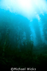 Kelp Forest off of Santa Cruz Island by Michael Wicks