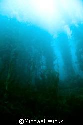 Kelp Forest off of Santa Cruz Island by Michael Wicks