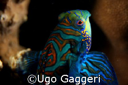 From Malapascua. Canon 350D and 60 mm Canon macro lens in... by Ugo Gaggeri