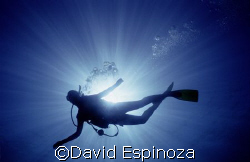 Silhouette of a young diver, Maui Hawaii Light & Motion ... by David Espinoza
