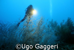 Calanggaman island wall.  by Ugo Gaggeri