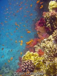 Aquarium Reef, Red Sea Hurghada by Iain Lumsden