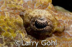 Crocfish Eyeball taken in Wakatobi by Larry Gohl