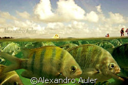 Porto de Galinhas natural pools. by Alexandro Auler