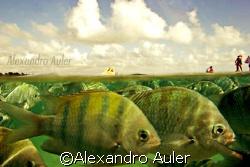 Porto de Galinhas natural pools. by Alexandro Auler