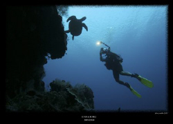 diver and turtle by Stewart Smith
