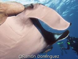 Giant Manta at Socorro islands by Ramón Domínguez