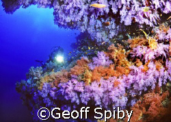 taken in the Blue caves at Maalhos Thila in Ari atoll, Ma... by Geoff Spiby