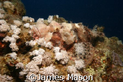 Smallscale Scorpionfish, Naama Bay by James Mason