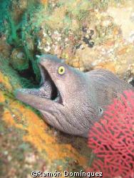 Moray eel, Sea of Cortéz by Ramón Domínguez