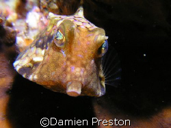 Pucker Up, Normally these fish aren't that photogenic,how... by Damien Preston