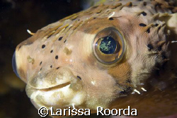 Smile for the camera!  Love the eyes! by Larissa Roorda