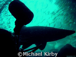Waiting to exit - Fish Rock Cave - South West Rocks New S... by Michael Kirby