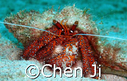 a beautiful hermit crab face to me.