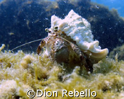 taken on a shallow dive off one of the public beaches in ... by Dion Rebello