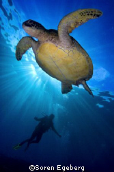 """Turtle Time"" shot in Sipadan, South Point, spring 2007 by Soren Egeberg"
