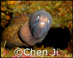 don't look at me like that!   by Chen Ji