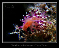 Pulau Tioman, Canon G2, Ikelite DS-125 by James Flear