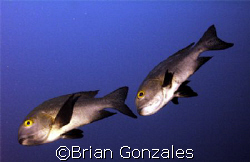 2 Fish by Brian Gonzales