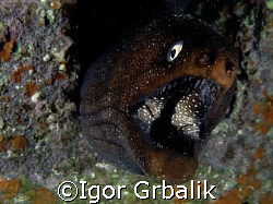 """Moray"", Canarian Islands by Igor Grbalik"