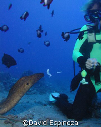 eel feeding, Maui HI by David Espinoza