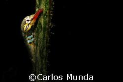 Pipefish on sea grass. Samal Island. Canon Ixus 60 by Carlos Munda