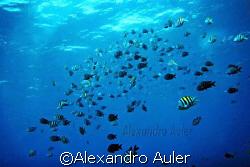 Outside sea . Fernando de Noronha's Island. by Alexandro Auler