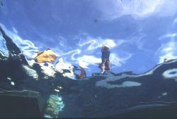 Fish eye view; Palau; Eastern Caroline Islands; Housed Ni... by Rick Tegeler