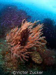 namena marine reserve by Victor Zucker