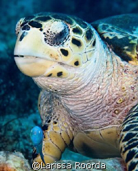 Turtle and his buddy-fish up close. by Larissa Roorda